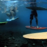 imaginarium reef video