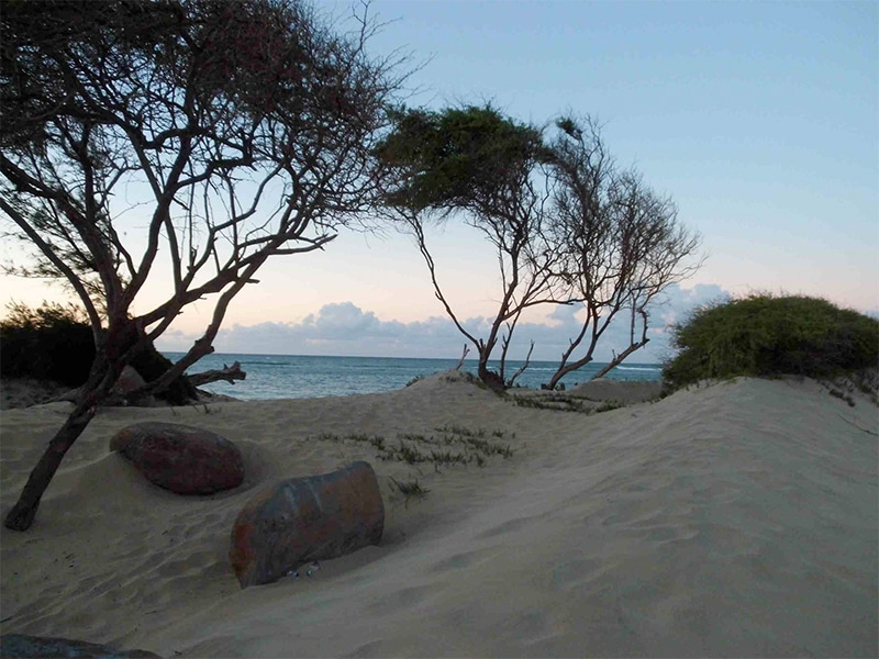 jenny surft maui beach