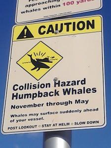 superflavor jenny surft warning