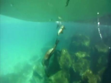 Video thumbnail for vimeo video SUP Video – Underwater Love Part II – SUPERFLAVOR SURF MAGAZINE