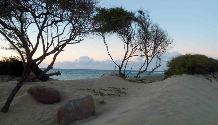 Jenny Surft – Maui Storys